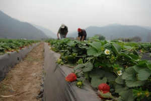 agricultores-Argentina-big